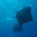 Manta Bay, 17 Jun, 2012
